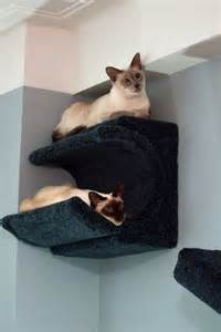 cat wall shelves climbing catsplay cat furniture fall finds new products and