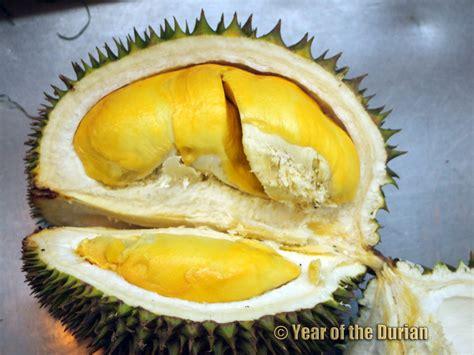 philippine durian varieties