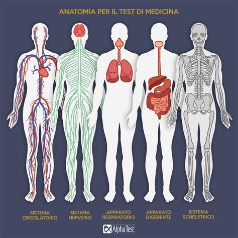 test medicina argomenti anatomia per il test di medicina cosa studiare alpha