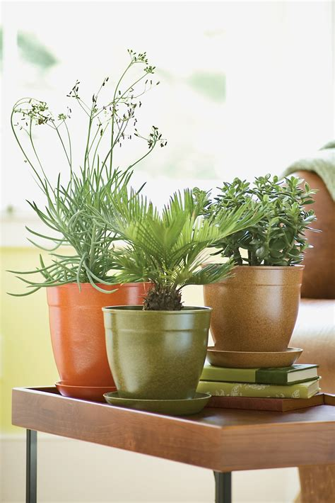 unique indoor planters recommended decorative planters the latest home decor ideas