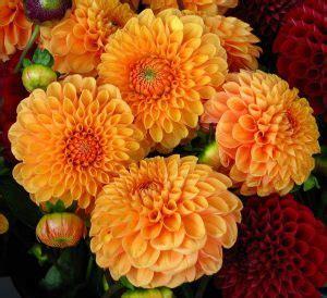 fiori autunnali matrimonio nozze green 10 fiori di matrimonio suddivisi per stagione