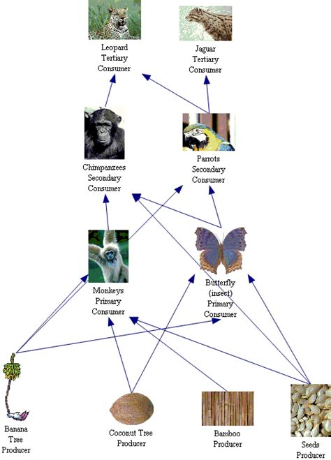 chimpanzee food chain diagram rainforest food web new calendar template site