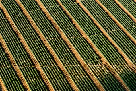 Free Images : wood, field, farm, lawn, texture, leaf, view