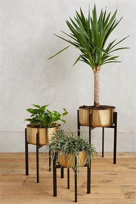 plant stands  raise  bar  stylish interior decors