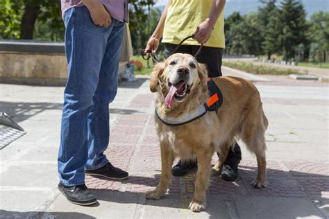 what are service dogs used for service dogs are a real problem the dogington post
