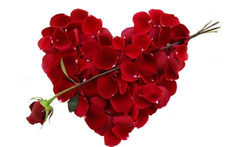 Valentines Day Roses That Speak To You by Tcg February To Or Not To The Growing Season