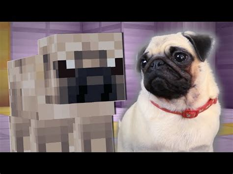 pugs in minecraft dantdm pugs in the snow the minecart