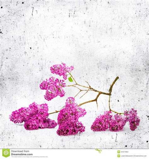 any design of flowers blue background with lilac flowers stock images image