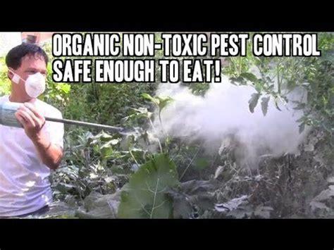 non toxic garden pest organic non toxic pest that is safe enough to eat