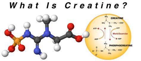 creatine tips creatine supplement information 101 hayward s total