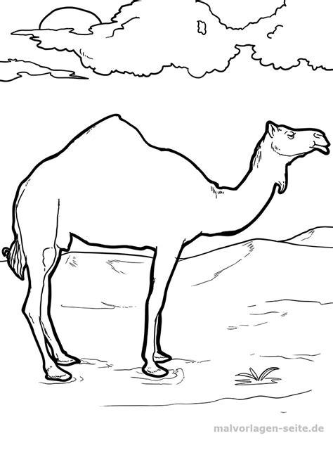 malvorlage kamel tiere