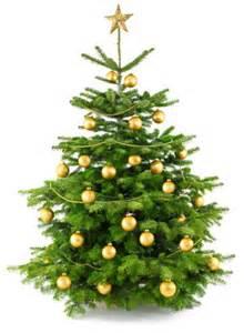 weihnachtsbaum christbaum tannenbaum