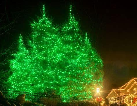christmas tree lighting installed lights installation tree doctors inc