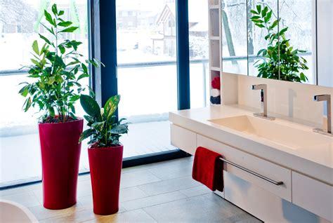 moderne zimmerpflanzen moderne gef 228 223 e verwandeln hydrokulturpflanzen in