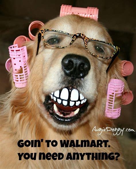 dogs walmart dogs of walmart lol