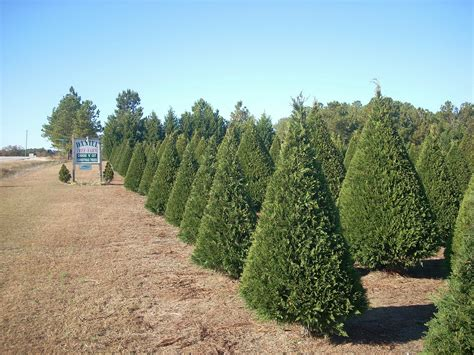top rated christmas tree farm in kansas city drought causes challenges for kansas tree farmers kcur