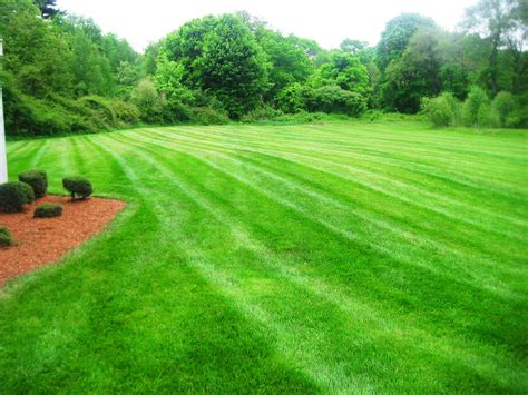 lawn care lawn care brothers landscapers inc