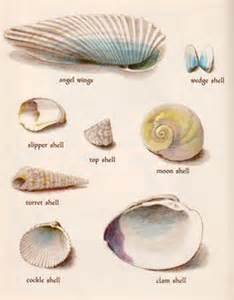 sea weeds shells and fossils classic reprint books 1000 images about seashell prints on shells