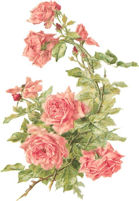 rose pattern png catherine klein peach roses digital elements wings of
