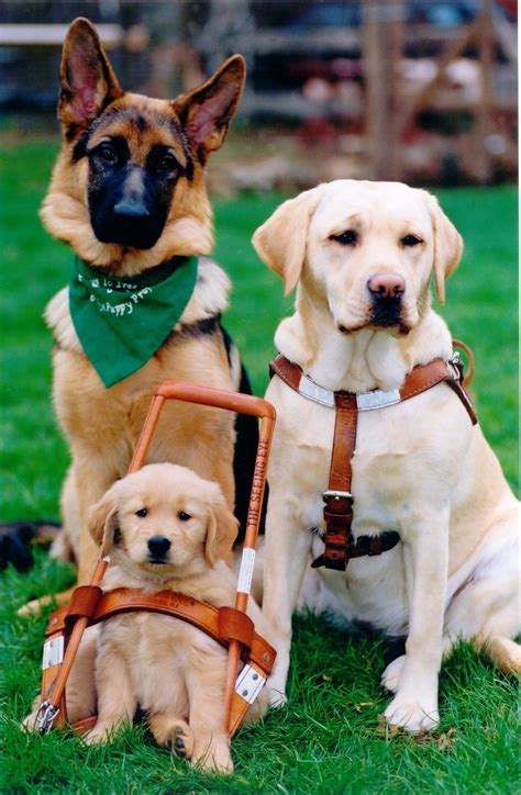 seeing eye dogs morris county tourism bureau s historical tours and