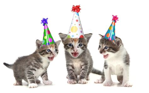 Cat Wishing Happy Birthday Birthday Wishes For Cats Photo And Card Pictures Happy