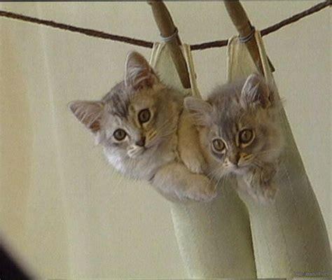 Gamis Anak Milli On Cat Flower 2 kittens background wallpaper hd
