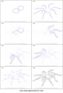 How To Draw A Step By Step How To Draw A Tarantula Printable Step By Step Drawing