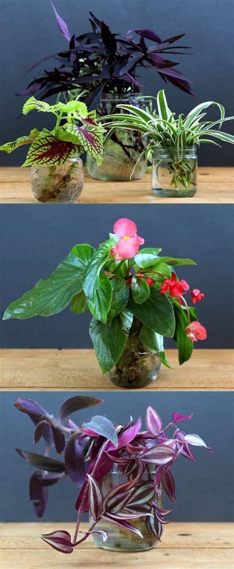 easy plants to grow indoors de 25 bedste id 233 er inden for wandering jew p 229 pinterest