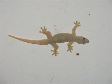imagenes de salamandras blancas besuconas observado por chriswbrown en julio 16 2007