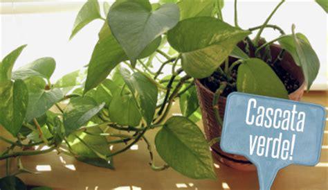 piante da interno 8 piante cascanti renderanno il