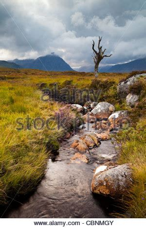 a lone dead tree on rannoch moor with buachaille etive mor