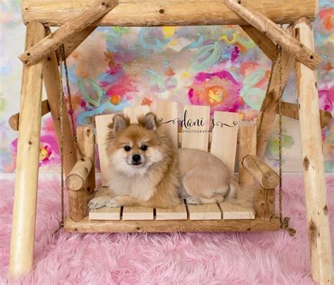 Swing Pets Gachapin X Mukku cat or pet cedar log porch swing bed chair