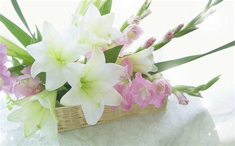 peluang usaha budidaya bunga gladiol  analisa usahanya