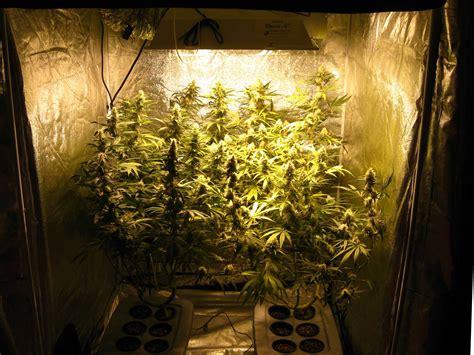 hydroponic grow journal  oz harvest grow