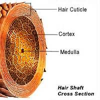 hair cross section 301 moved permanently