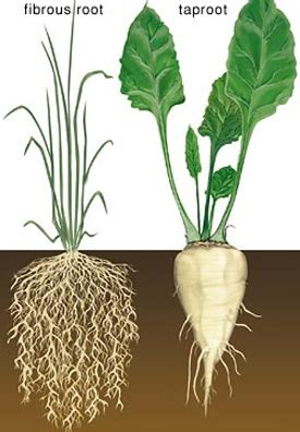 roots of style do you live in a minimalist traditional house elimu plants