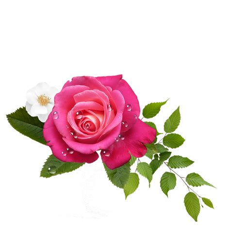 photo rose flower arrangement blossom