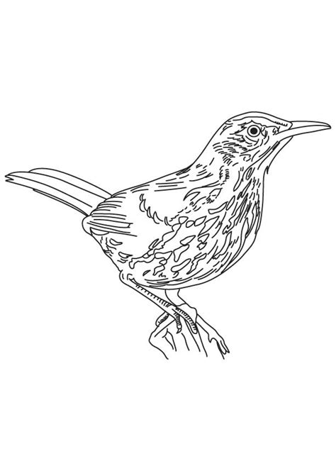 long tailed brown thrasher coloring page download free
