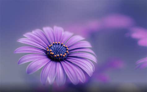 purple blue flower hd wallpapers  mobile phones