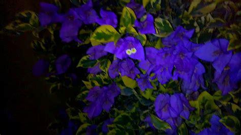 bunga kertas ungu  malam youtube