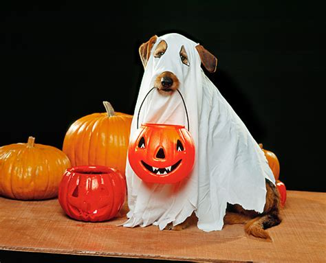 ghost costume for dogs the coolest five costumes for your that you can make urdogs