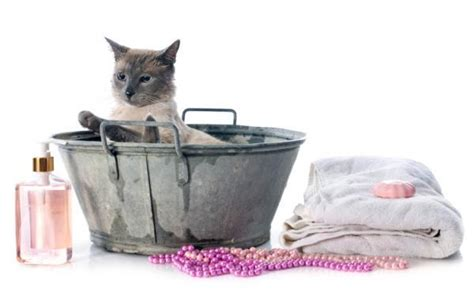 8 Tips On Bathing Your Feline by Tips For Bathing A Cat With Fleas