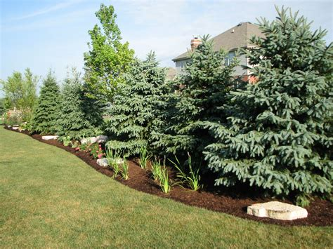privacy landscape ideas existing home landscaping