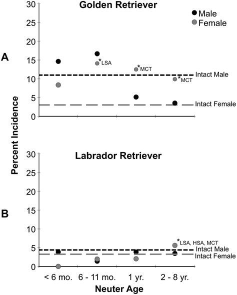 golden retriever cancer rate when to neuter or spay your golden retriever the bearden pack the bearden pack