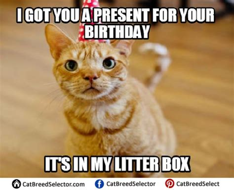 Cat Happy Birthday Meme - happy birthday cat pictures to pin on pinterest pinsdaddy