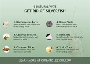 6 ways to instantly get rid of silverfish bugs