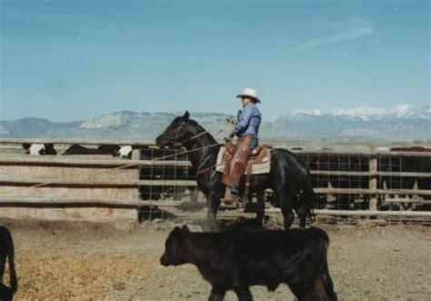 fjord accent accent ranch quarter horses appaloosa horses and