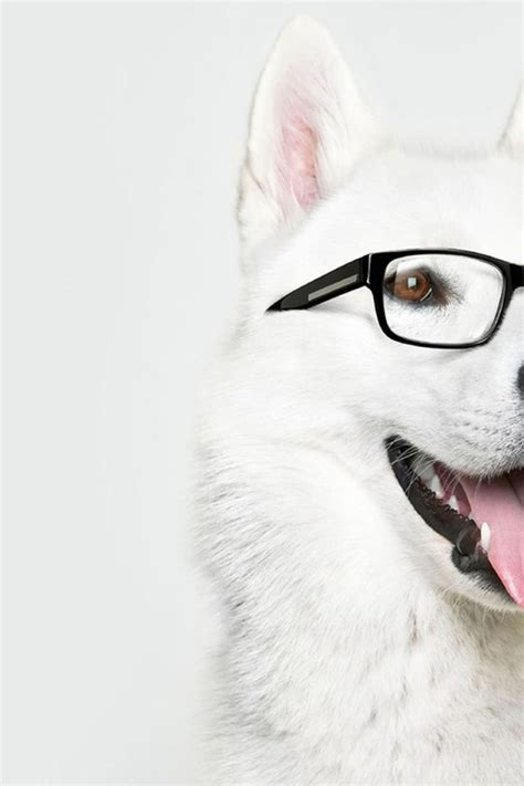 dogs with glasses with glasses desktop wallpapers 640x960