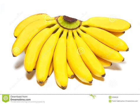tiny banana name little bananas related keywords little bananas long tail
