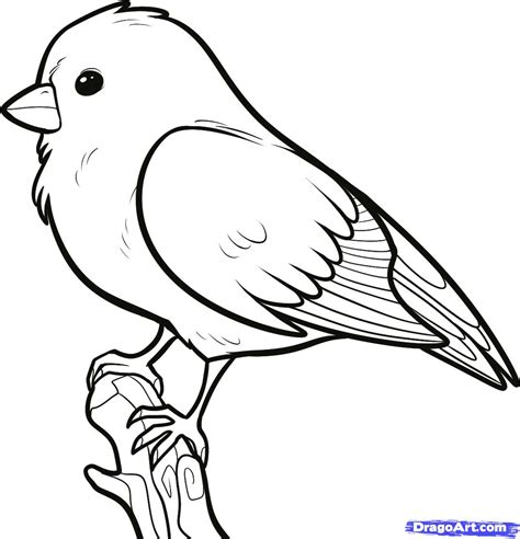 how to draw doodle birds how to draw a songbird songbirds step 6 birds